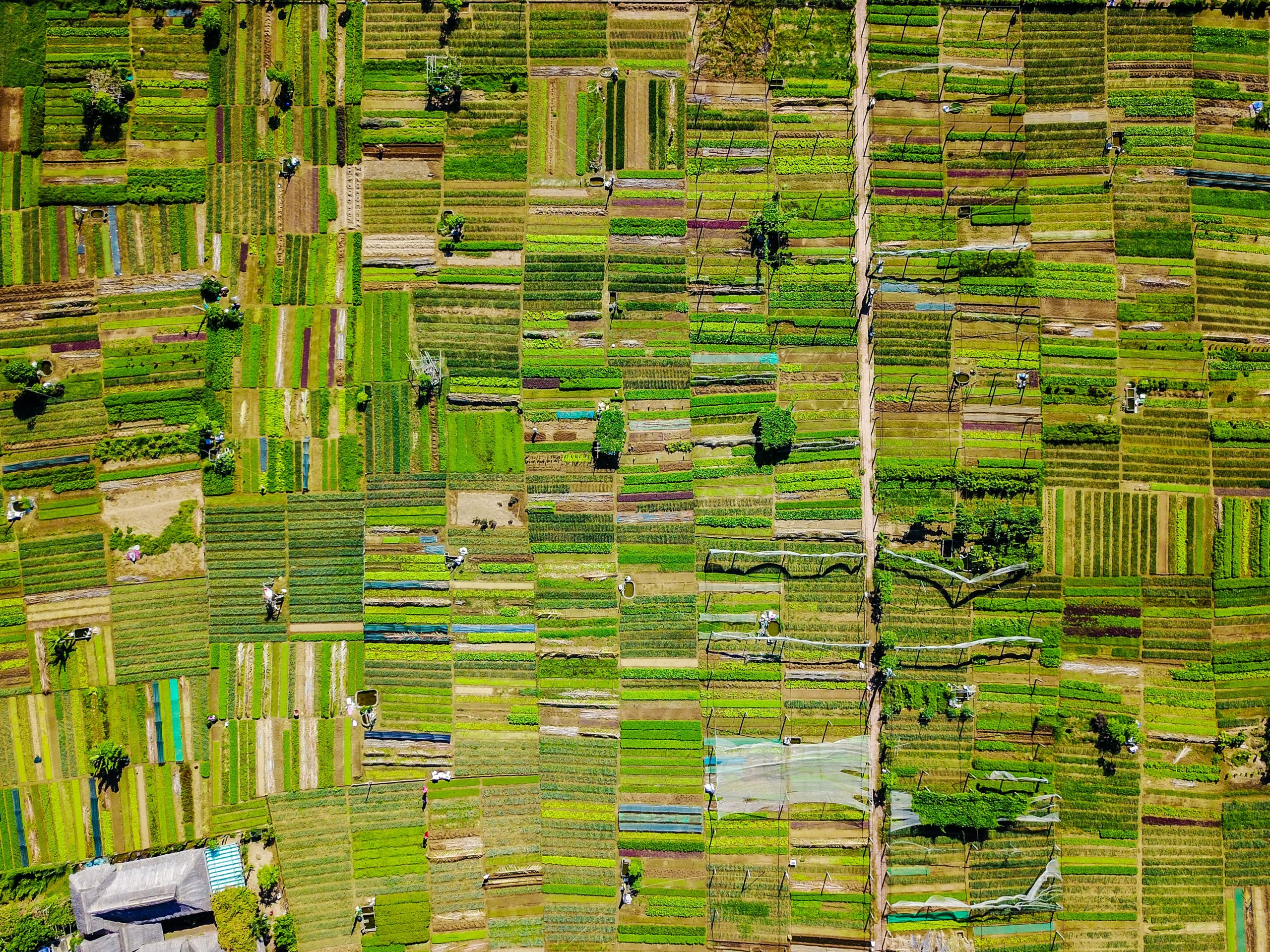Aerial photograph of farm land creating a geometric grid of green rectangles
